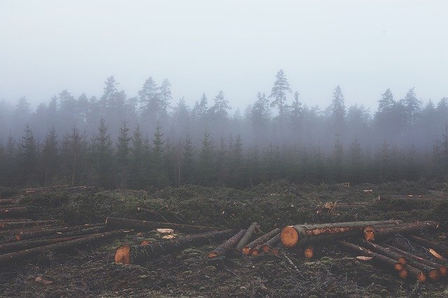 Deforested trees