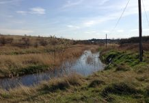 Photo of Swanscombe marshes. Keywords: gentrification urban cities green spaces wildlife habitat Britain RSPB