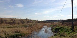 Photo of Swanscombe marshes. Keywords: gentrification urban cities green spaces wildlife habitat Britain RSPB