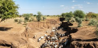 Ethiopian dried river bed