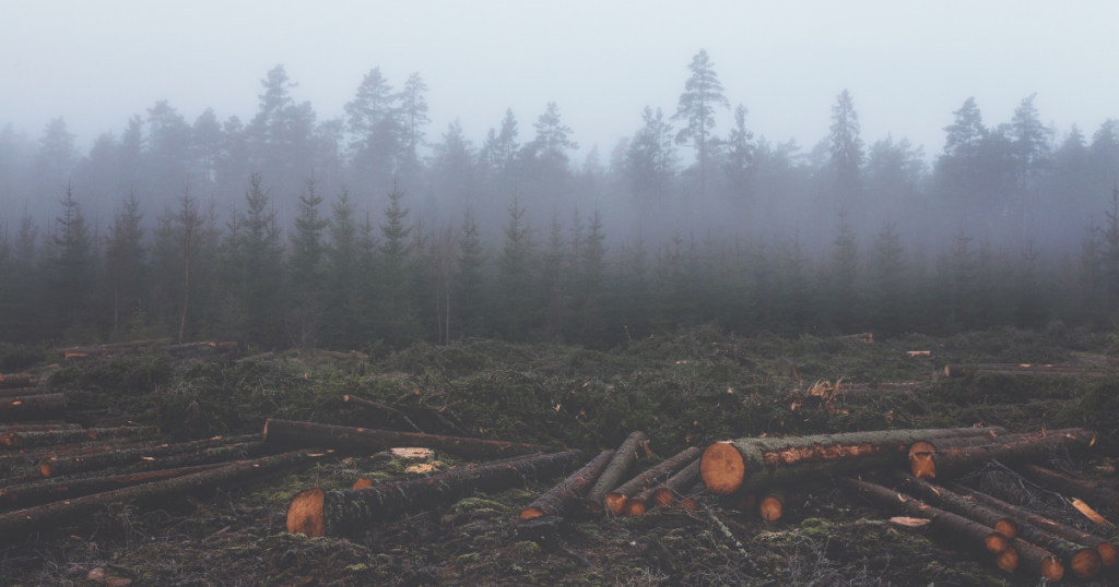 Metabolic rift - photo shows monoculture timber forest in background with freshly cut tree trunks in foreground.